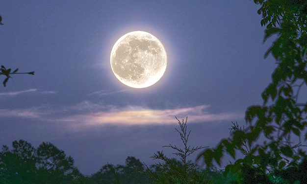 LUNAR LANDSCAPE – Creating the Perfect Moonlit Garden