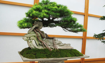 DARE TO BONSAI
